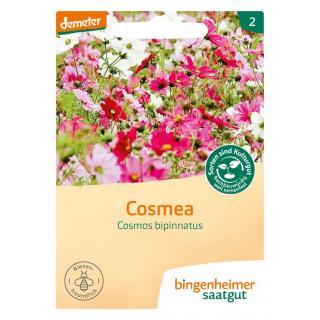 Cosmea