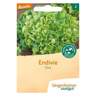 Endivie BIN